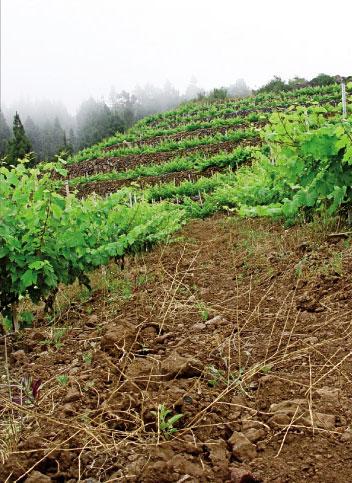 viticultura-de-montana
